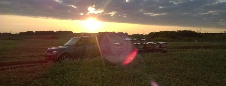Wschody słońca oglądamy z pola